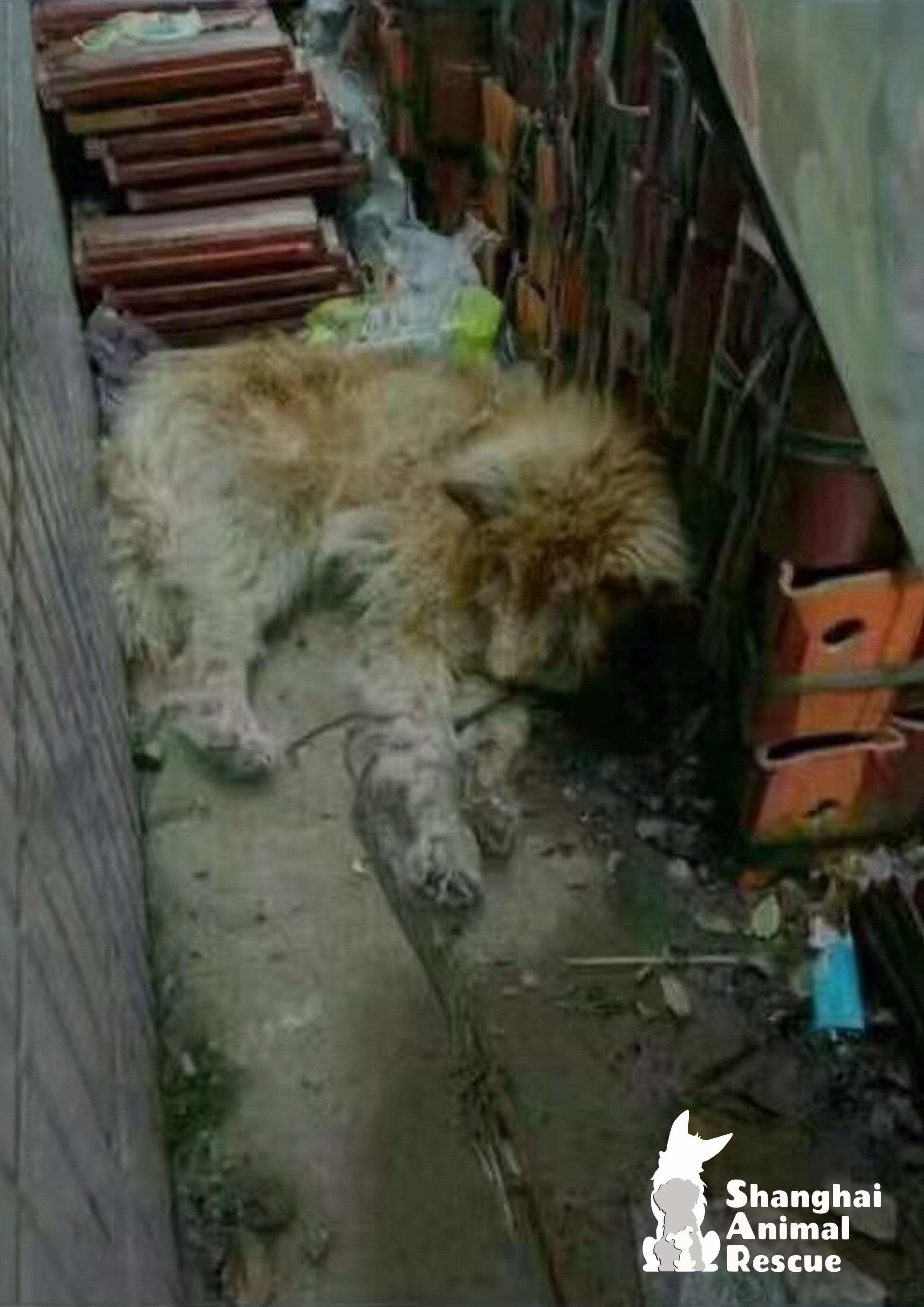 From trash to treasure… – Shanghai Animal Rescue