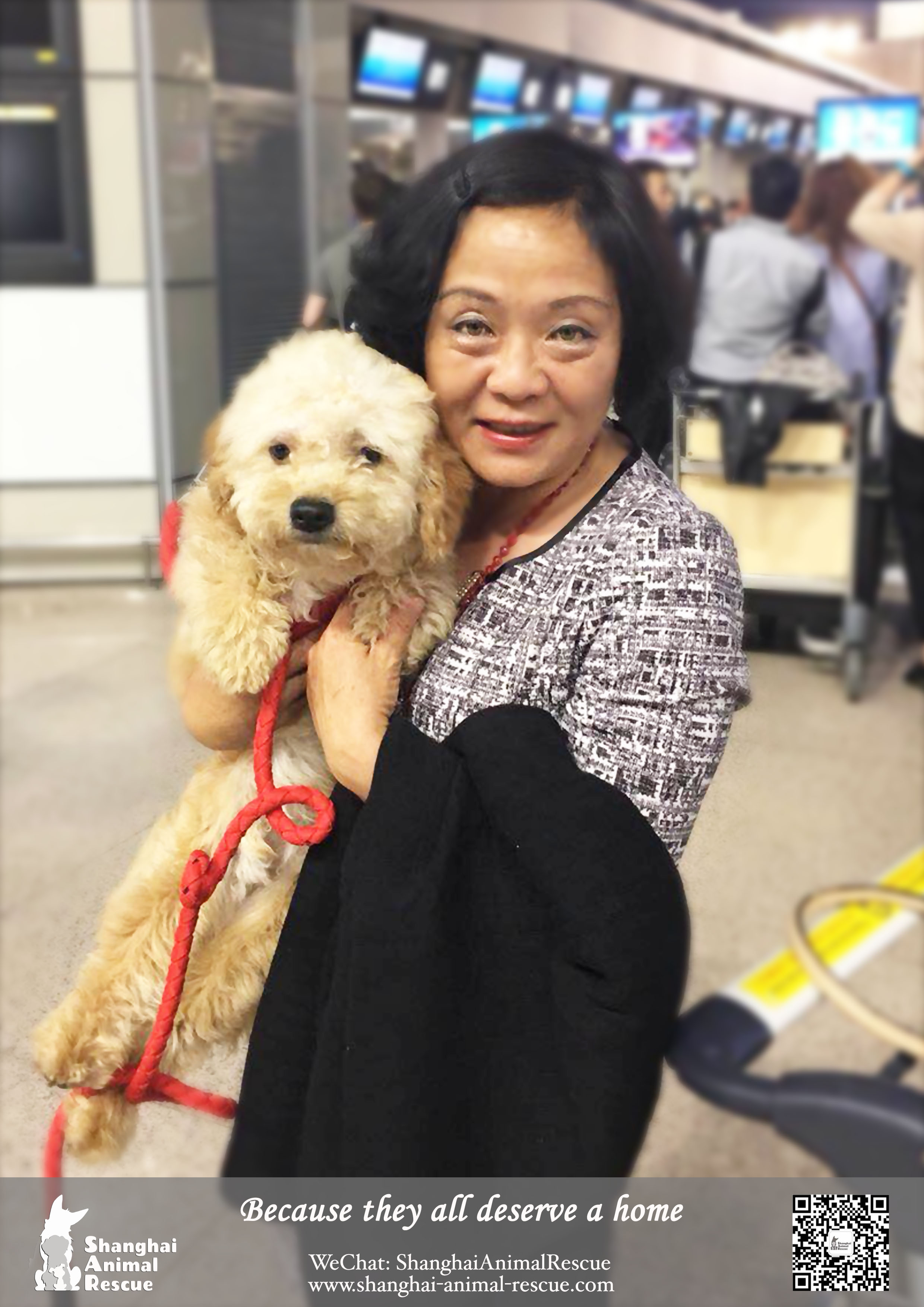 Shanghai Animal Rescue – Page 76 – Adopt a Chinese street dog!