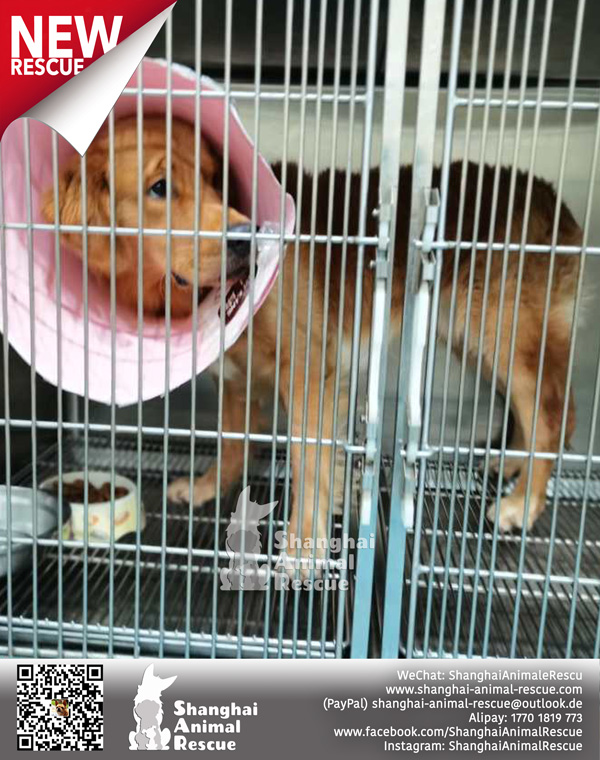 New-rescues-July-04