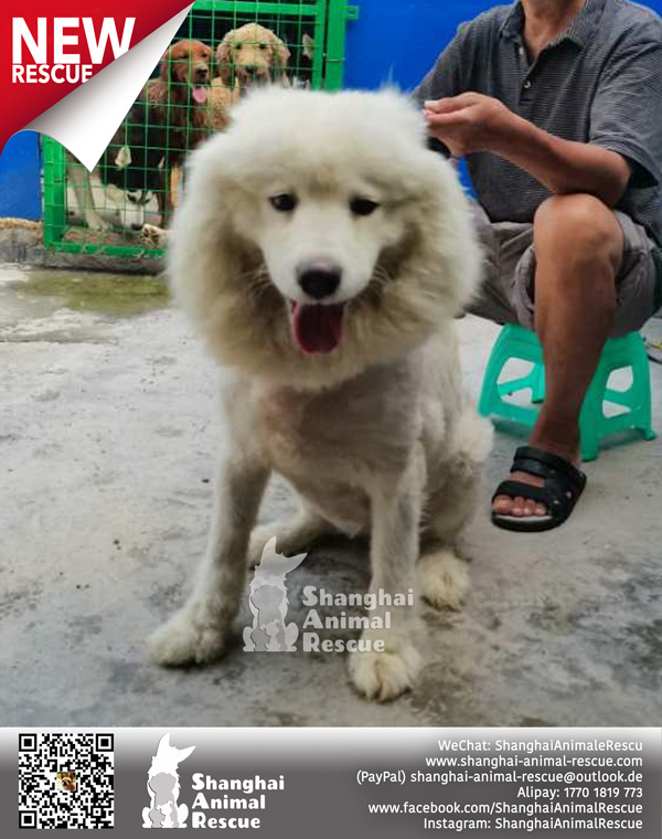 New-rescues-July-05