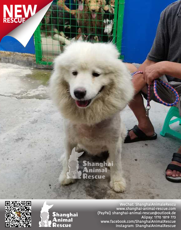 New-rescues-July-06