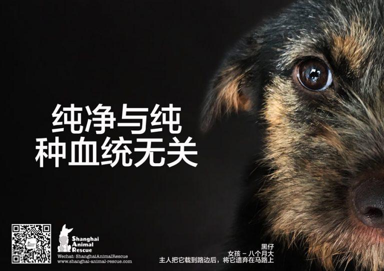 w-SAR-ADOPT-campaign-02-Flo-cn