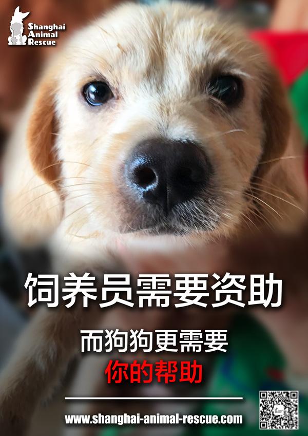 w-SAR-ADOPT-campaign-need-you-CN