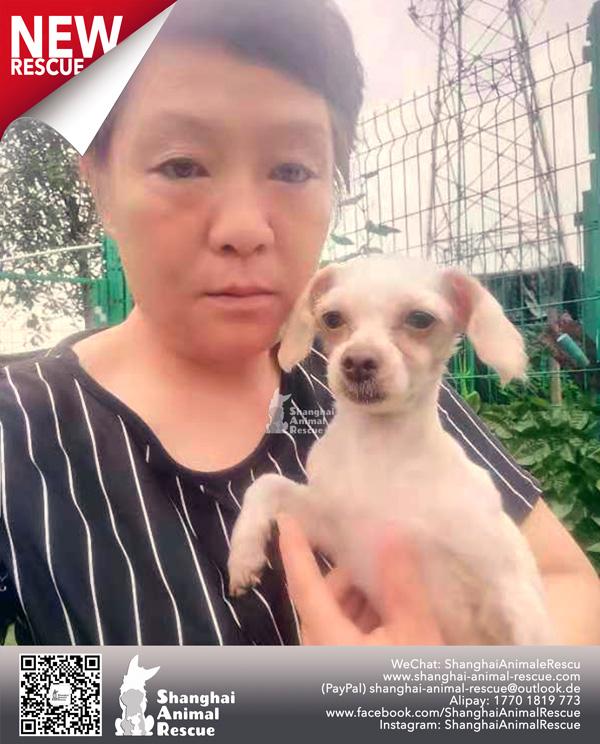 Pups-July-090701