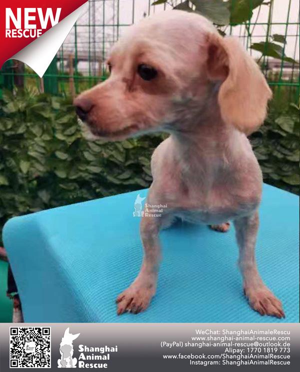 Pups-July-090704