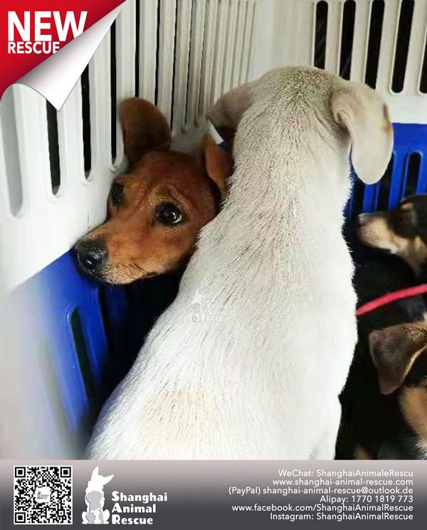 Pups-July-110702