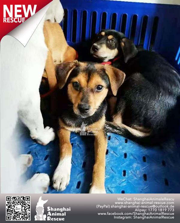 Pups-July-110703