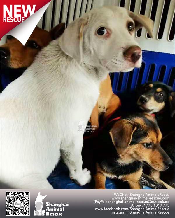 Pups-July-110704