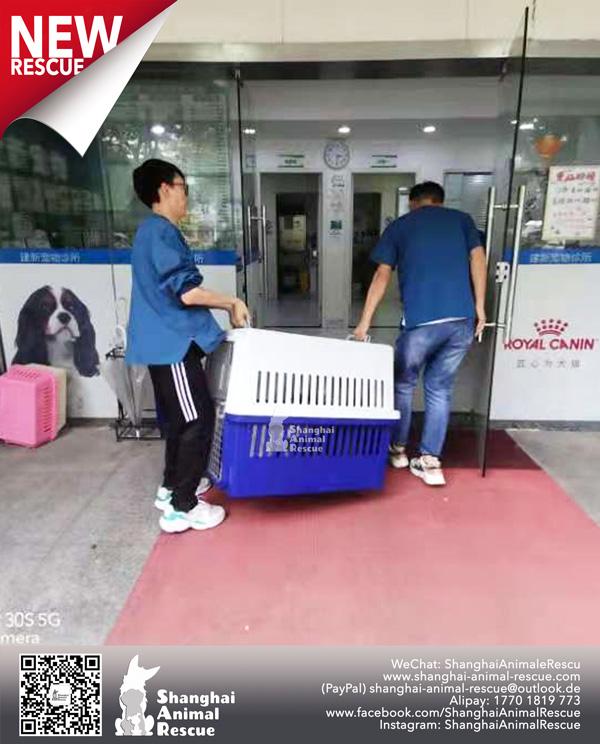 Pups-July-110705